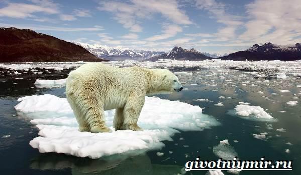 Животные-Арктики-4
