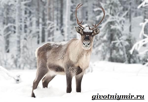Животные-Арктики-5
