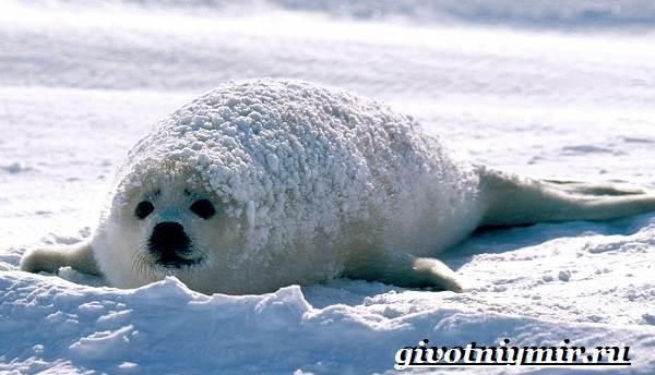 Животные-Арктики-7