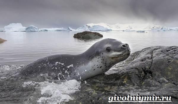 Животные-Арктики-8