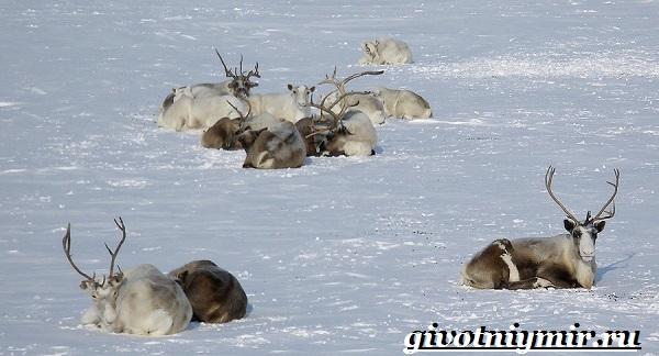 Животные-Арктики