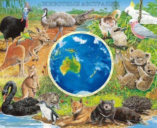 Животные-Австралии-1