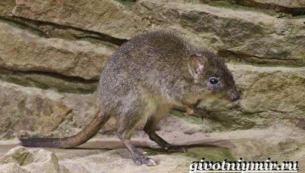Животные-Австралии-10