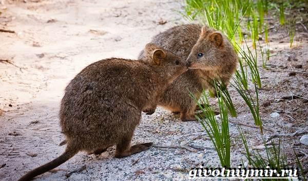 Животные-Австралии-11-2