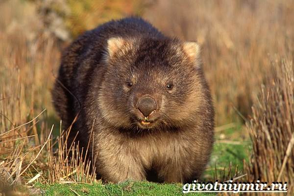 Животные-Австралии-13