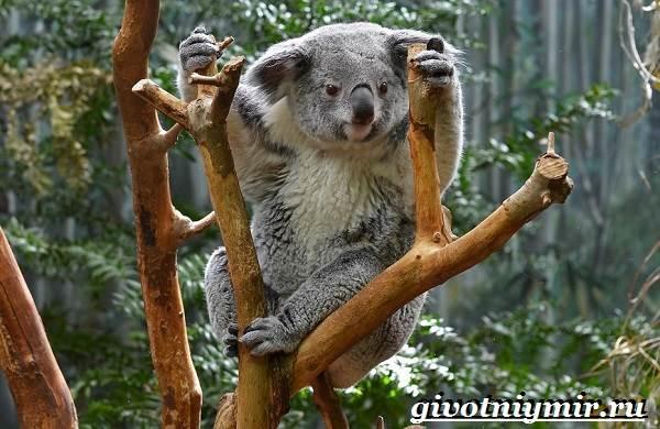 Животные-Австралии-14