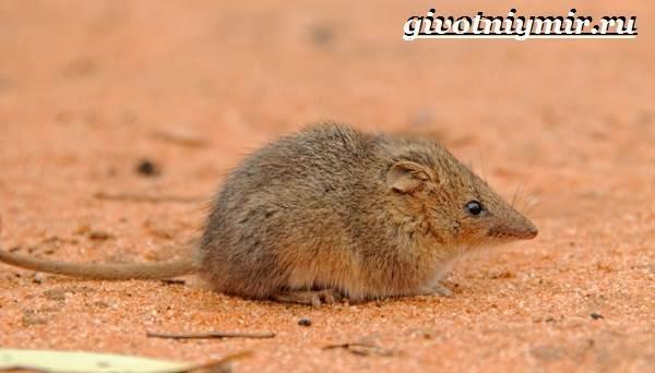 Животные-Австралии-15