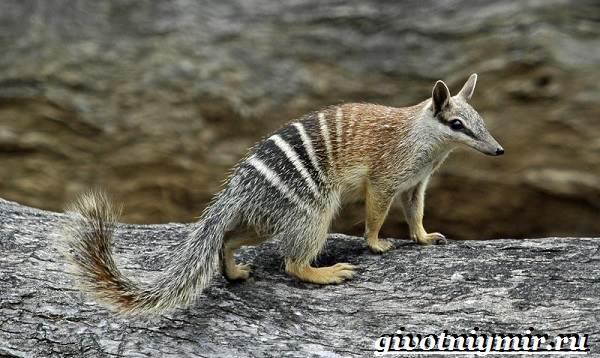 Животные-Австралии-16