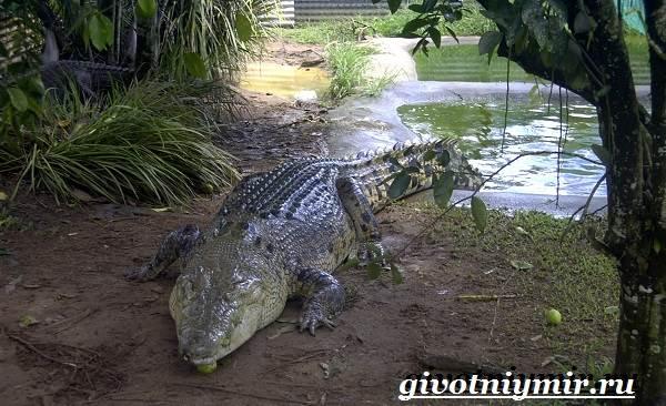 Животные-Австралии-17