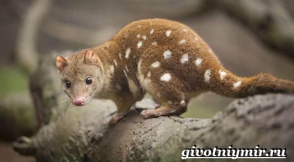 Животные-Австралии-19