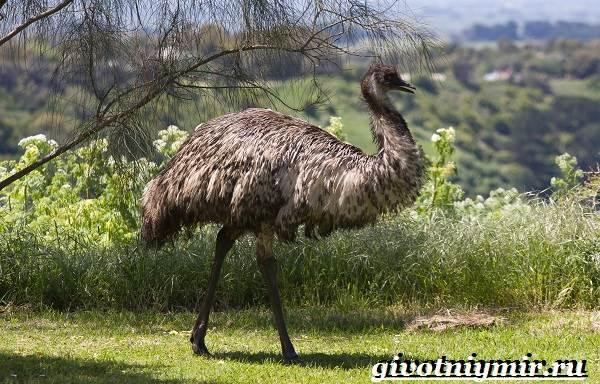 Животные-Австралии-26