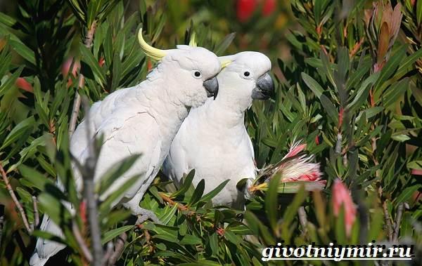 Животные-Австралии-27