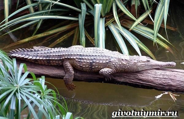 Животные-Австралии-31
