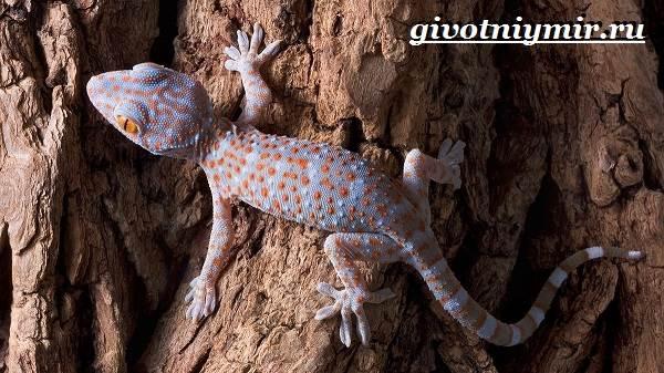 Животные-Австралии-32