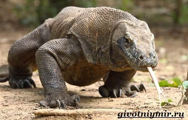 Животные-Австралии-33