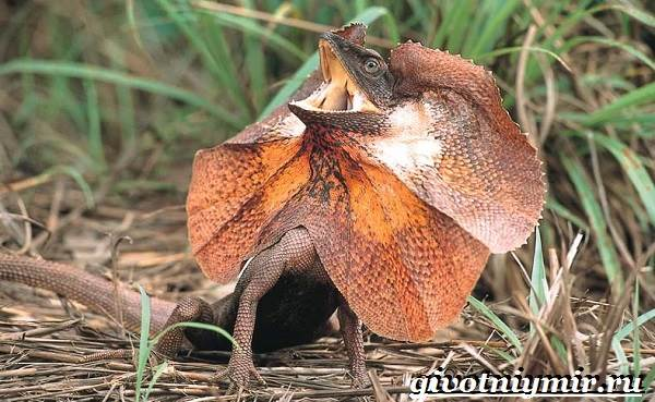 Животные-Австралии-34