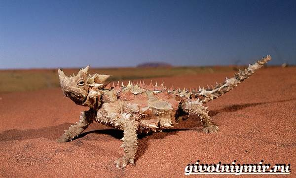 Животные-Австралии-35