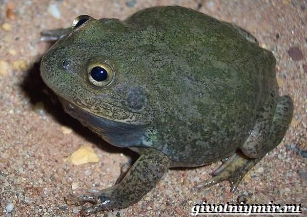 Животные-Австралии-36