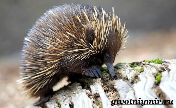 Животные-Австралии-5