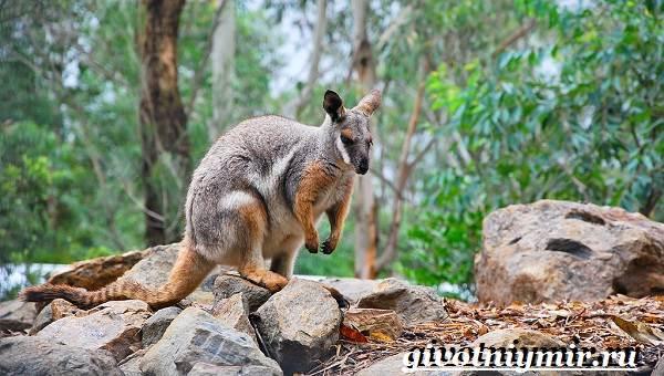Животные-Австралии-7