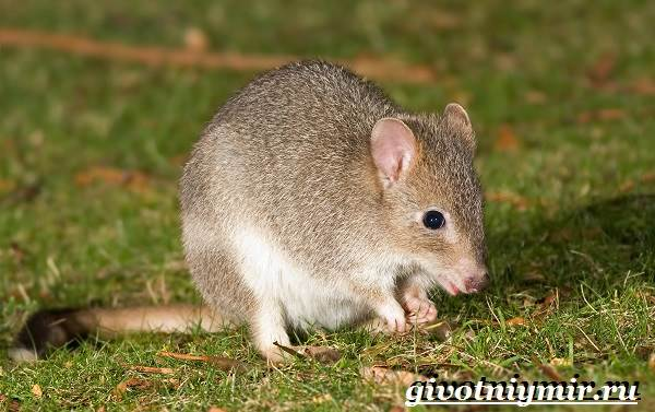 Животные-Австралии-8