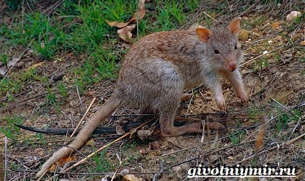Животные-Австралии-9