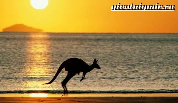 Животные-Австралии