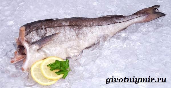 Пикша-рыба-Образ-жизни-и-среда-обитания-рыбы-пикша-6