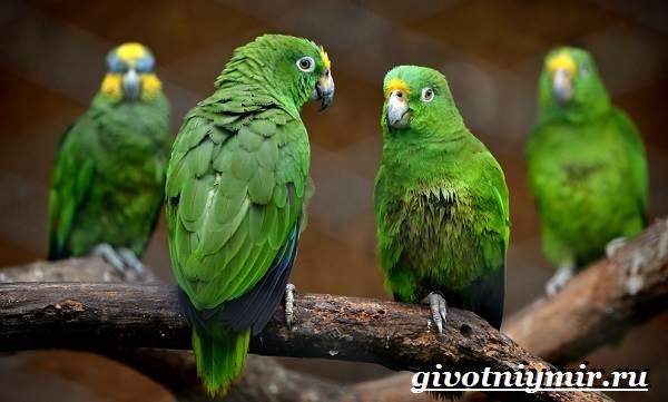 Попугай-аратинга-Образ-жизни-и-среда-обитания-попугая-аратинга-12