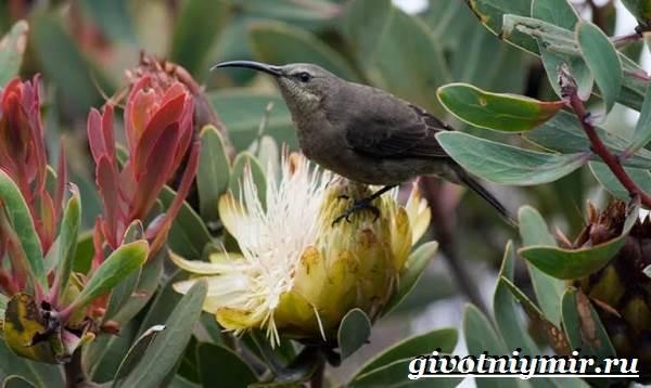 Птицы-Африки-Описания-названия-и-особенности-птиц-Африки-1