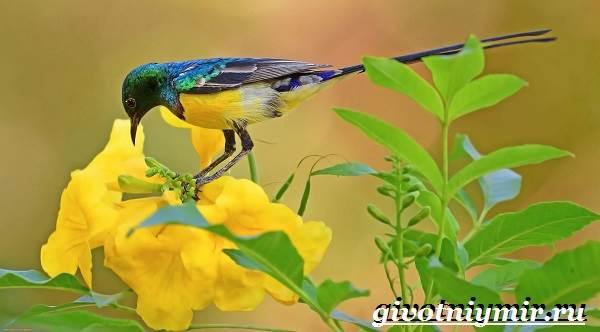 Птицы-Африки-Описания-названия-и-особенности-птиц-Африки-17