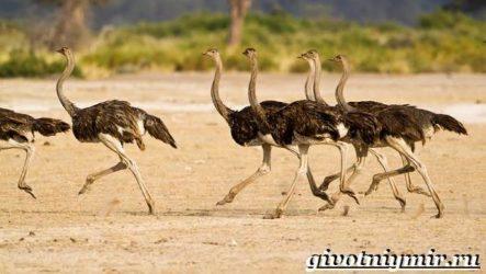 Птицы Африки. Описания, названия и особенности птиц Африки