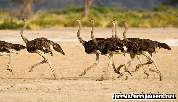 Птицы-Африки-Описания-названия-и-особенности-птиц-Африки-2