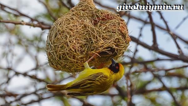 Птицы-Африки-Описания-названия-и-особенности-птиц-Африки-3