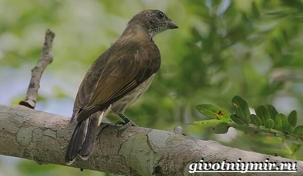 Птицы-Африки-Описания-названия-и-особенности-птиц-Африки-9