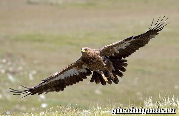 Птицы-средней-полосы-России-11