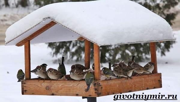 Птицы-средней-полосы-России-2