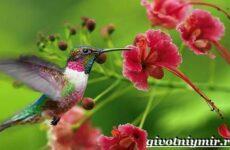 Тропические птицы. Виды, названия, описания и фото тропических птиц