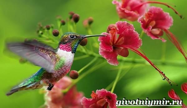 Тропические-птицы-Виды-названия-описания-и-фото-тропических-птиц-11