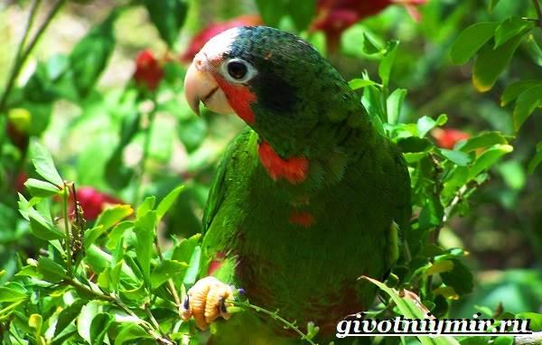 Тропические-птицы-Виды-названия-описания-и-фото-тропических-птиц-2