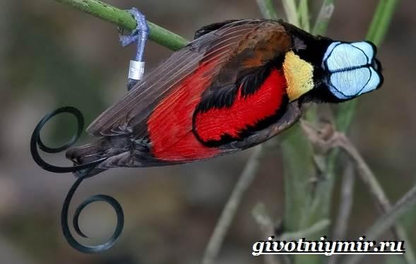 Тропические-птицы-Виды-названия-описания-и-фото-тропических-птиц-3