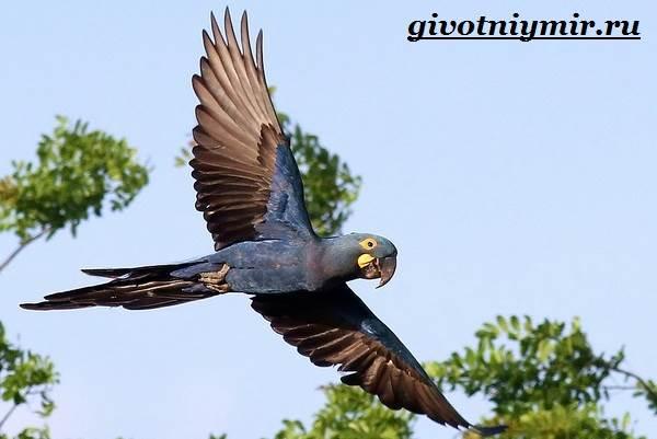 Тропические-птицы-Виды-названия-описания-и-фото-тропических-птиц-4