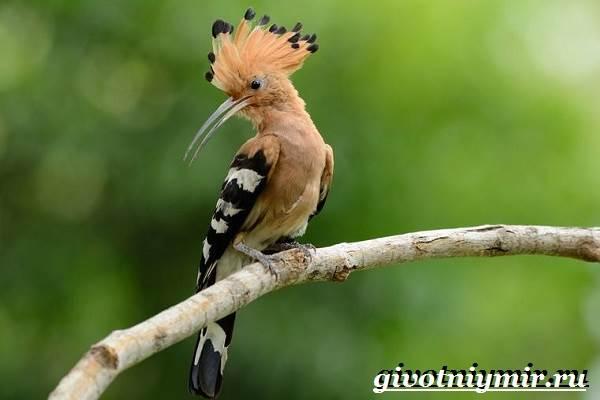 Тропические-птицы-Виды-названия-описания-и-фото-тропических-птиц-6