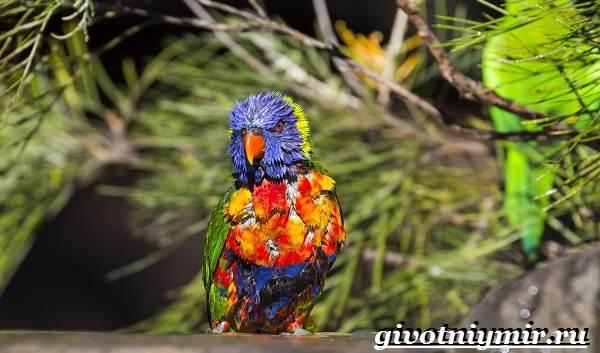 Тропические-птицы-Виды-названия-описания-и-фото-тропических-птиц-8