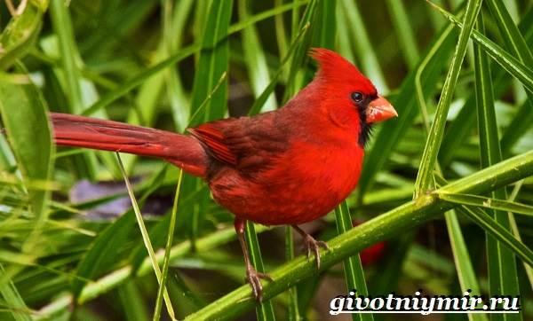 Тропические-птицы-Виды-названия-описания-и-фото-тропических-птиц-9