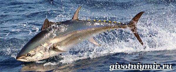Тунец-рыба-Образ-жизни-и-среда-обитания-тунца-1