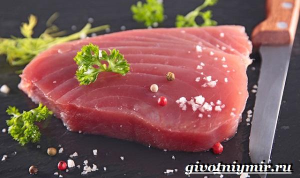 Тунец-рыба-Образ-жизни-и-среда-обитания-тунца-15