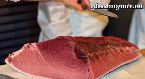 Тунец-рыба-Образ-жизни-и-среда-обитания-тунца-5