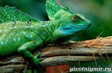 Василиск ящерица. Образ жизни и среда обитания василиска