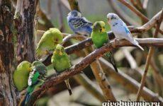 Виды попугаев. Описания, названия и особенности попугаев